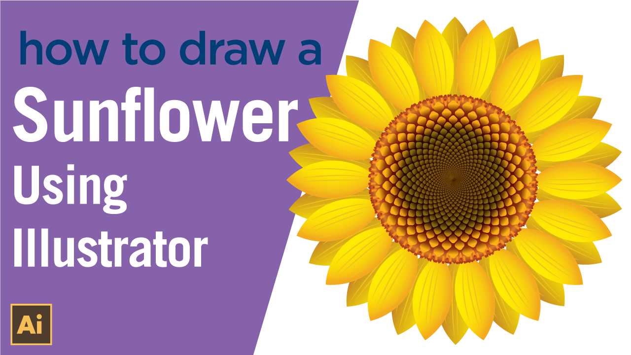 How to draw a Sunflower in vector using Illustrator